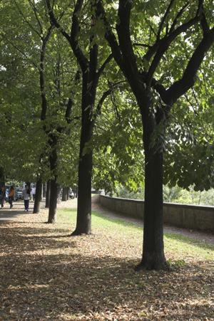 Foto alberi pista stazione Prato